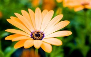 sfondo_fiori_1280x800